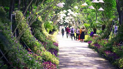 Vé Đảo Hoa Lan